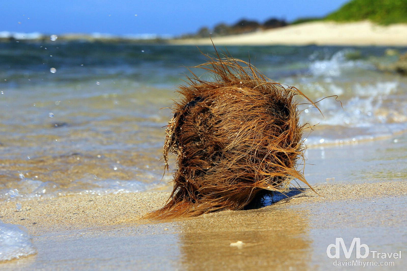 A coconut being jostled by the waves on the north shore of Utila, Bay Islands, Honduras. June 10th 2013.