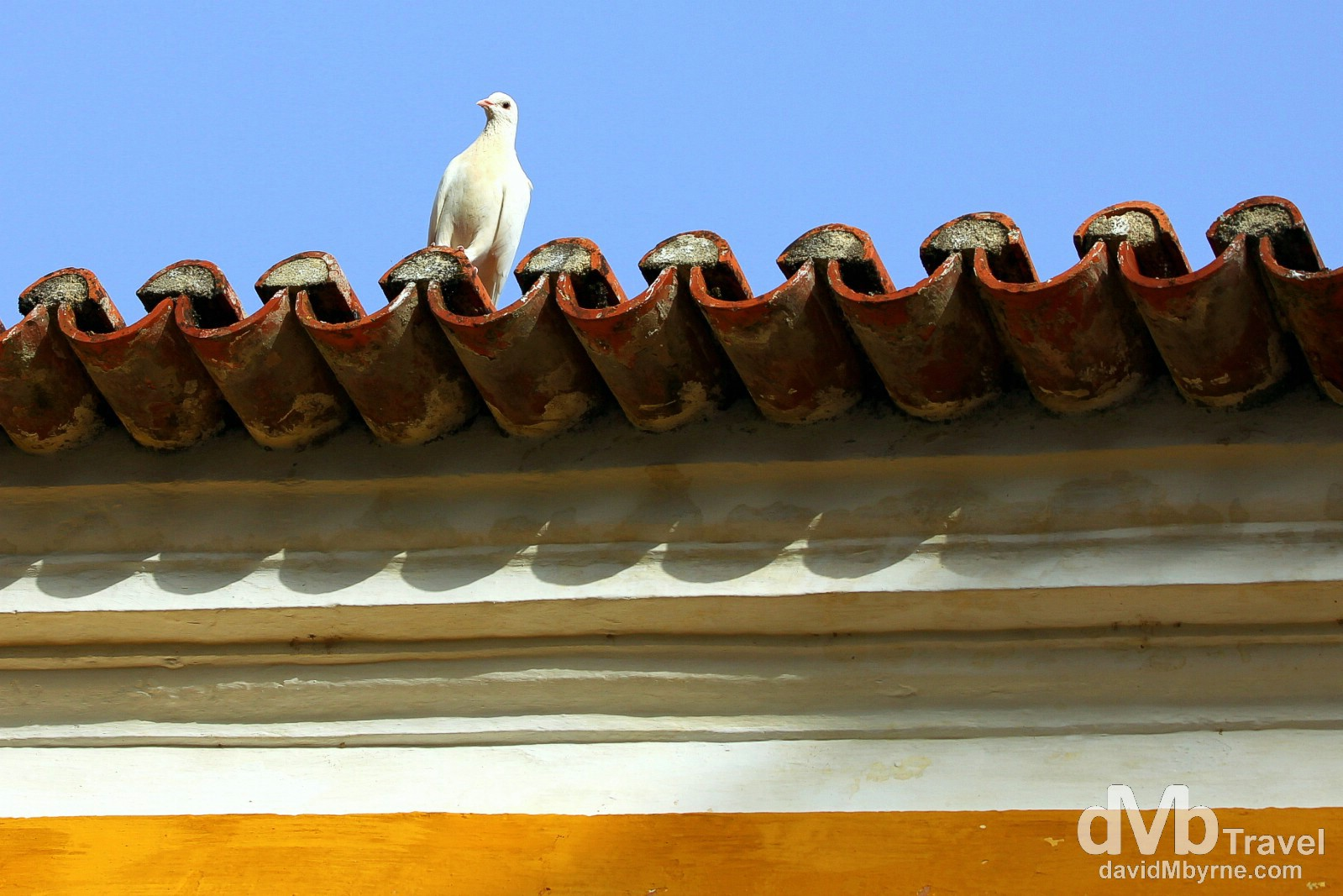 A dove perched on the roof of the ornate chapel of Quinta de Sant'Ana estate. Off the main courtyard of the Quinta, the church, dating to 1633, is the oldest part of the estate. The dozen or so doves who call the courtyard home really push the idyllic-o-meter into overdrive. Gradil, Mafra, Portugal. August 21st 2013.