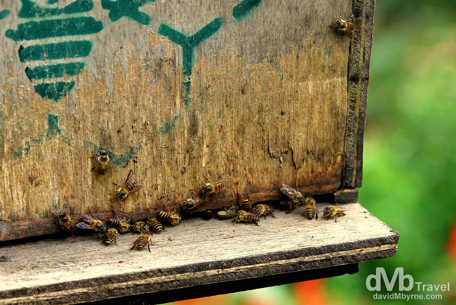 Honeybee Farm, Cameron Highlands, Malaysia. March 26th 2012.