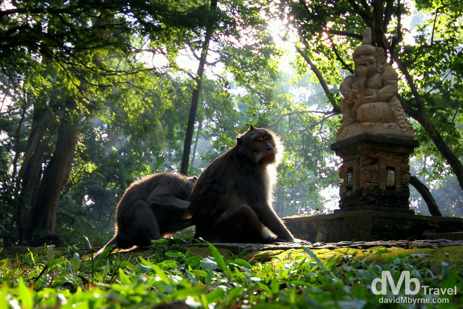 Monkey Forest, Ubud, Central Bali, Indonesia. June 15th 2012.