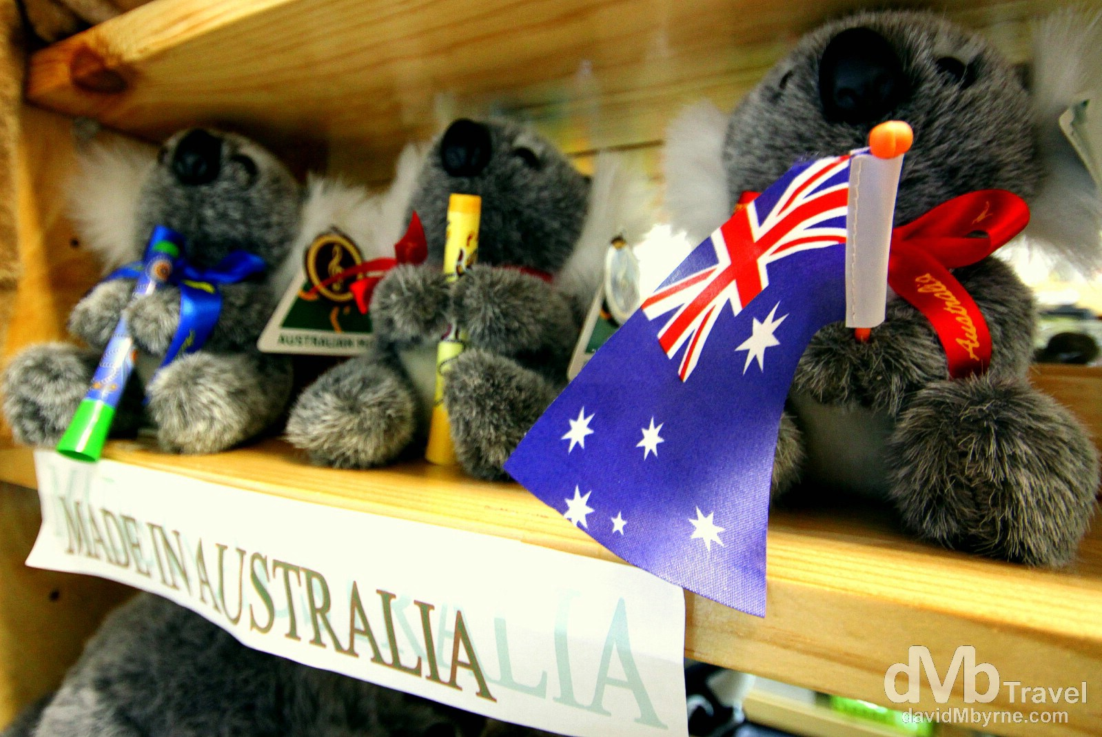 The Sunshine Coast isn't just about beaches & scenery. It has some nice mountain retreats, one of which is Montville, a fashionable village full of air & graces, Devonshire tea rooms & cottage crafts. It was in a tourist shop that I saw these stuffed, Made-In-China Koala bears which I thought were cute… & very Australian. There's gotta be some real koalas aroudn here somewhere. Travellers Treasures, Montville, Queensland, Australia. April 4th 2012.