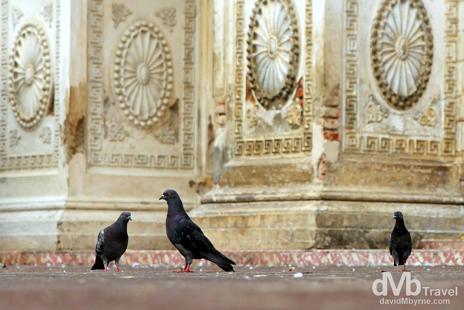 Pigeons outside Santa Ana Cathedral, Santa Ana, Western El Salvador. May 27th 2013.