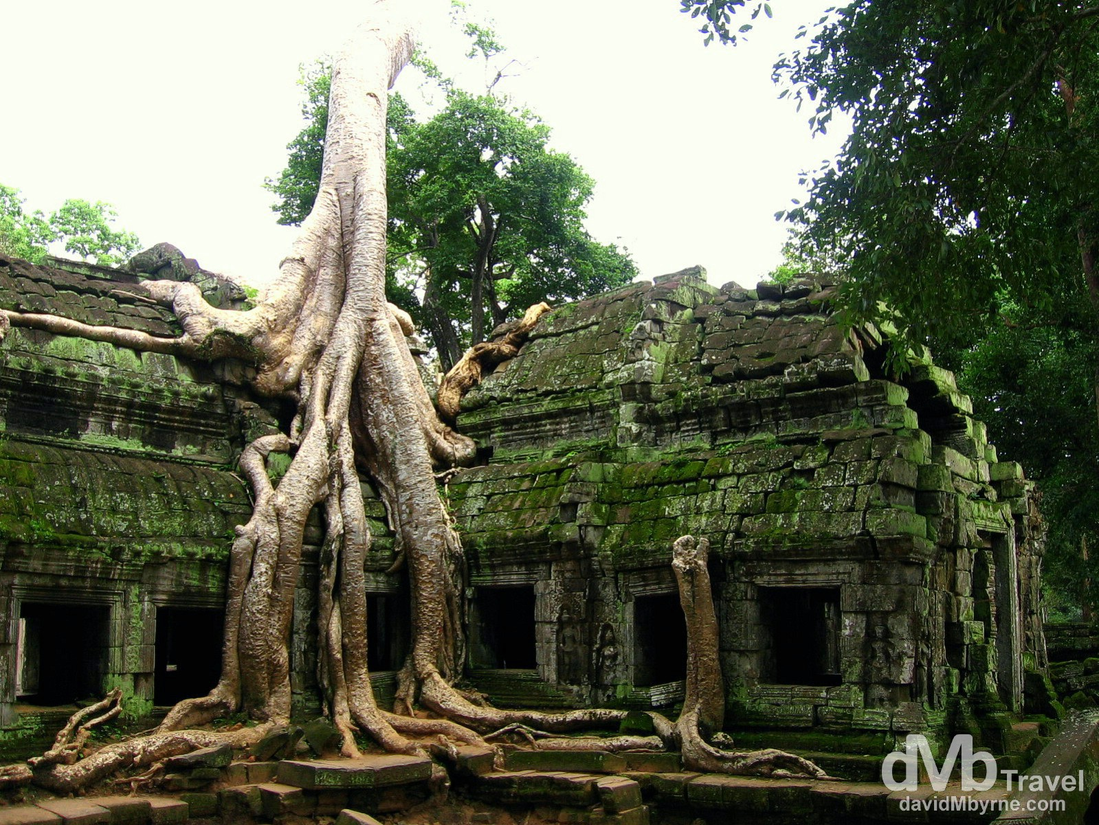Jungle growth envelops a section of the temple Ta Prohm of the Angkor temple complex, Siem Reap, Cambodia. September 20th 2005.