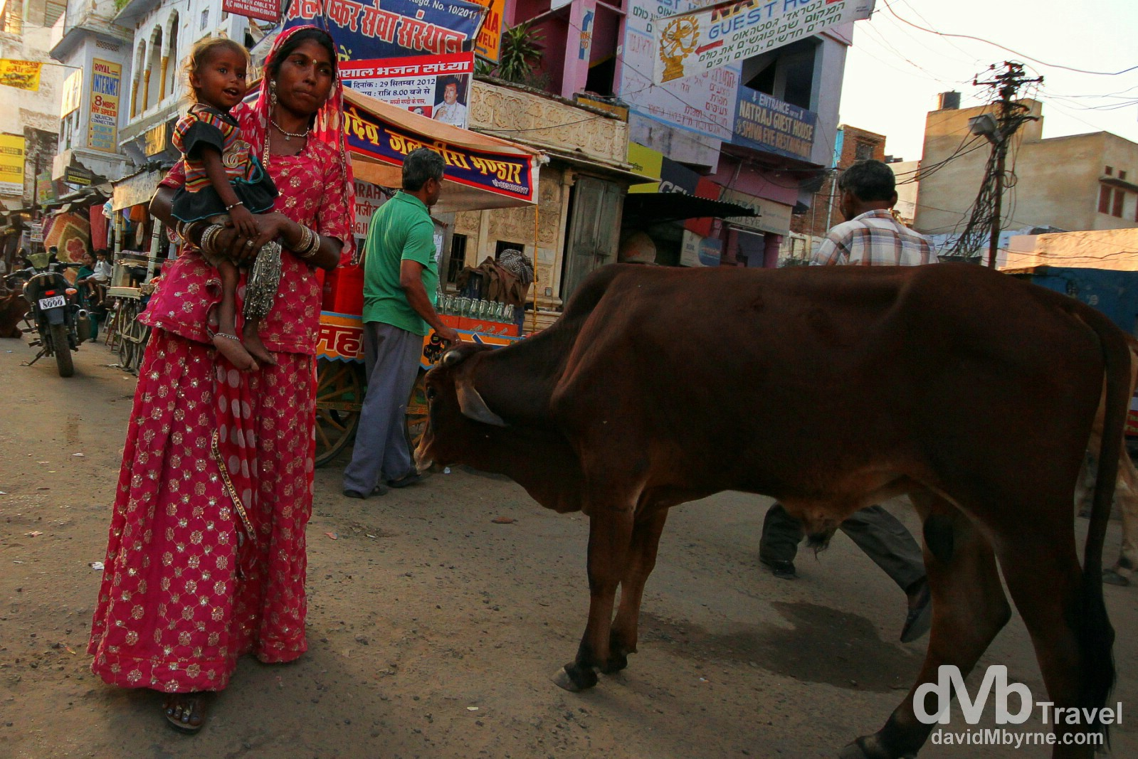 Avoiding a cow on the streets of Pushkar, Rajasthan, India. October 3rd 2012.