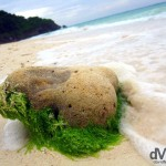 A moss covered stone on the shores of Puka beach, Boracay Island, the Philippines. September 24th 2011.