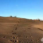 Footsteps in the mammoth sand dunes of Port Waikato, North Island, New Zealand. May 2nd 2012.