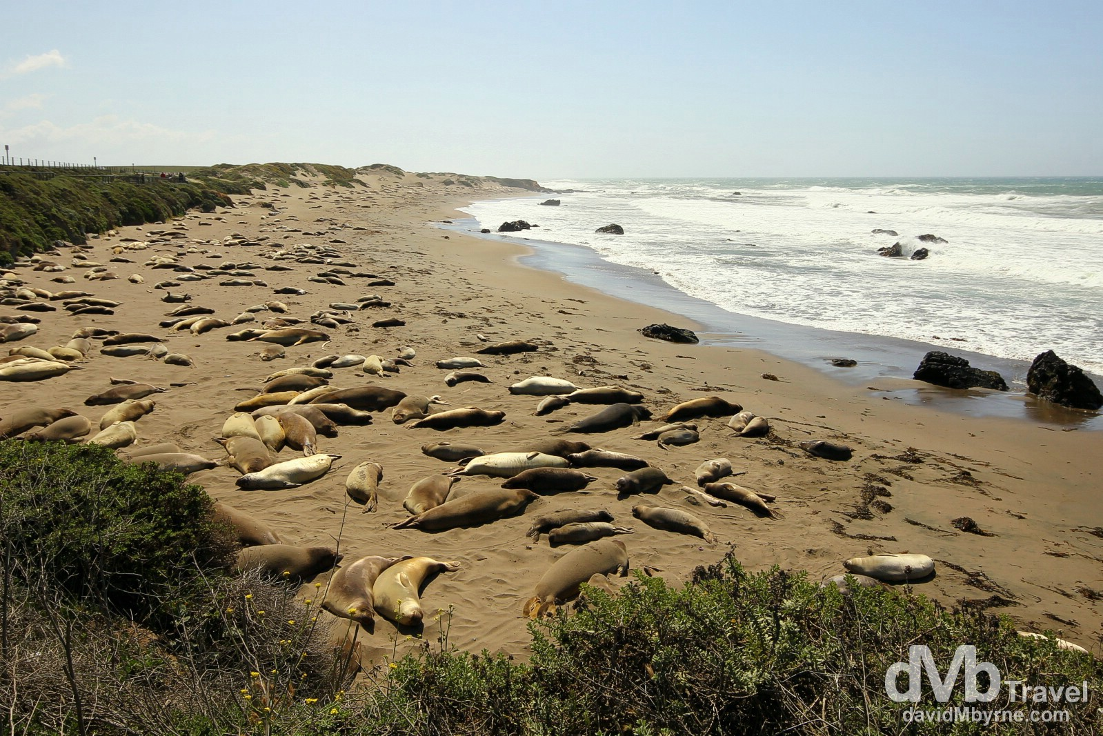 Elephant Seals resting on a beach off the Cabrillo Highway, San Simeon, California, USA. April 8th 2013.