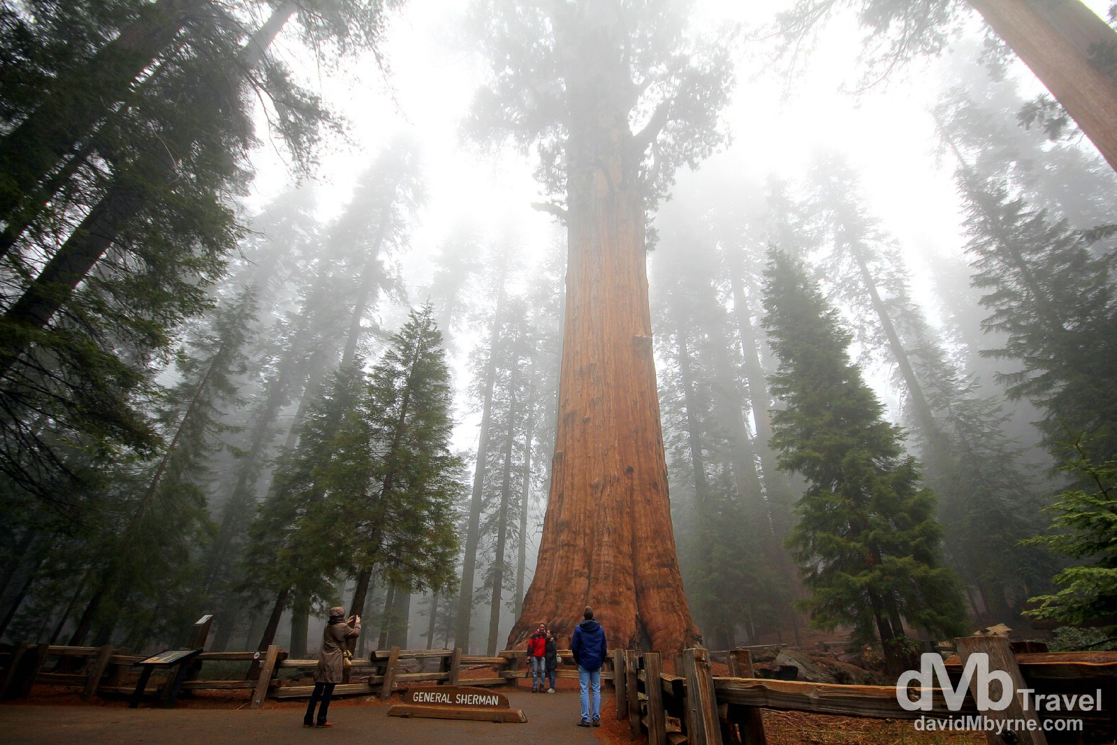 General Sherman, the largest tree on earth, in Sequoia National Park, California, USA. April 2nd 2013.