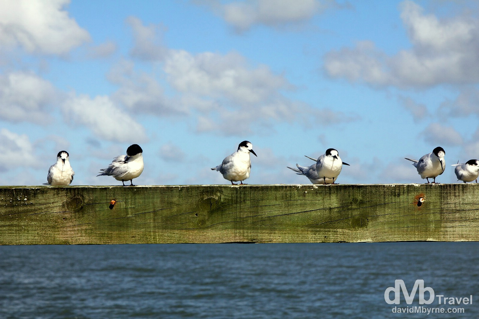 Gulls on the pier at Shelly Beach, North Island, New Zealand. April 27th 2012.