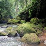 Jungle scenery near Goa Gajah (Elephant Cave) on the outskirts of Ubud, Bali, Indonesia. June 19th 2012.