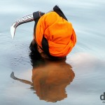 A Sikh devotee in the Amrit Sarovar (Pool of Nectar) in the Golden Temple complex, Amritsar, Punjab, India. October 9th 2012.