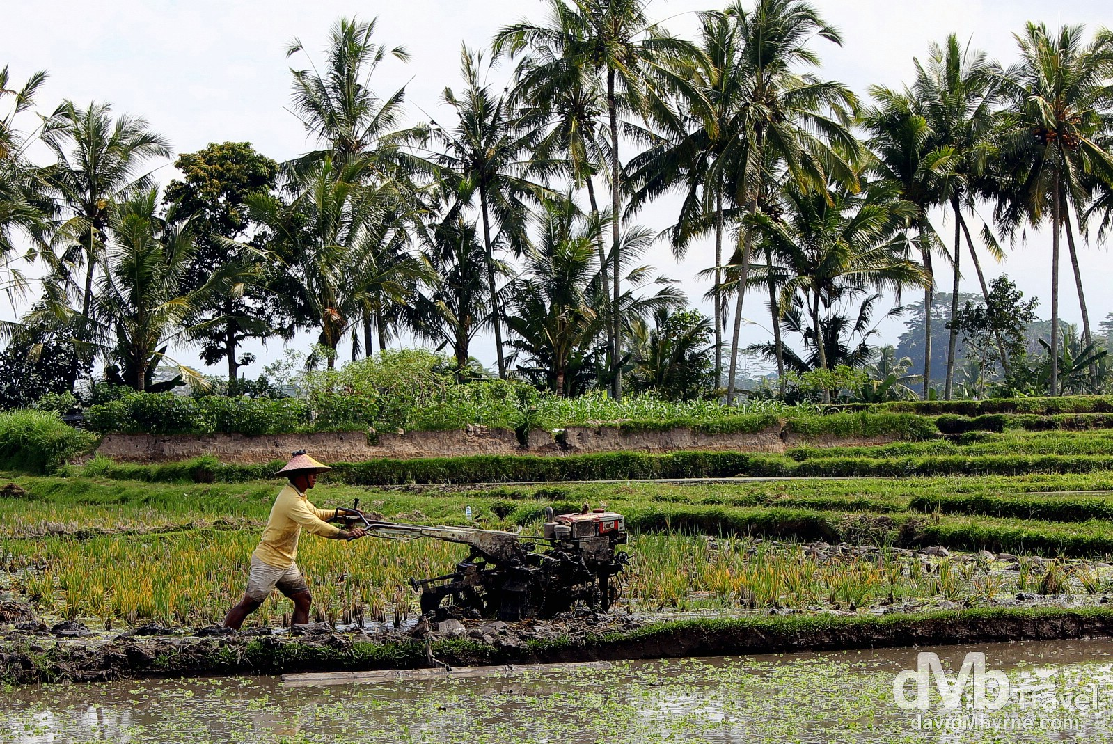 A paddy worker on the outskirts of Ubud, Bali, Indonesia. June 19th 2012.