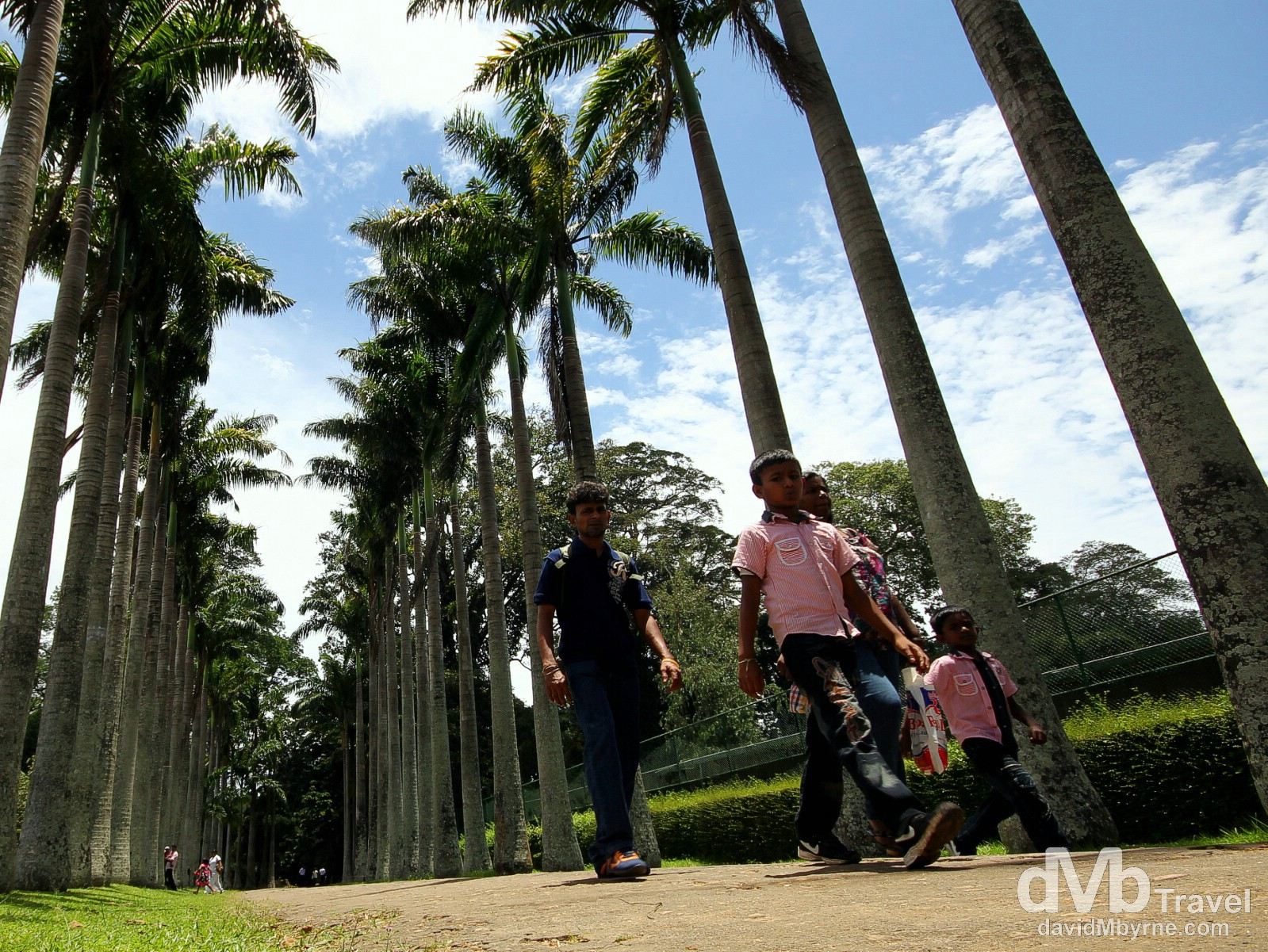 Walking Palm Avenue in Peradeniya Botanic Gardens on the outskirts of Kandy, Sri Lanka. September 9th 2102.