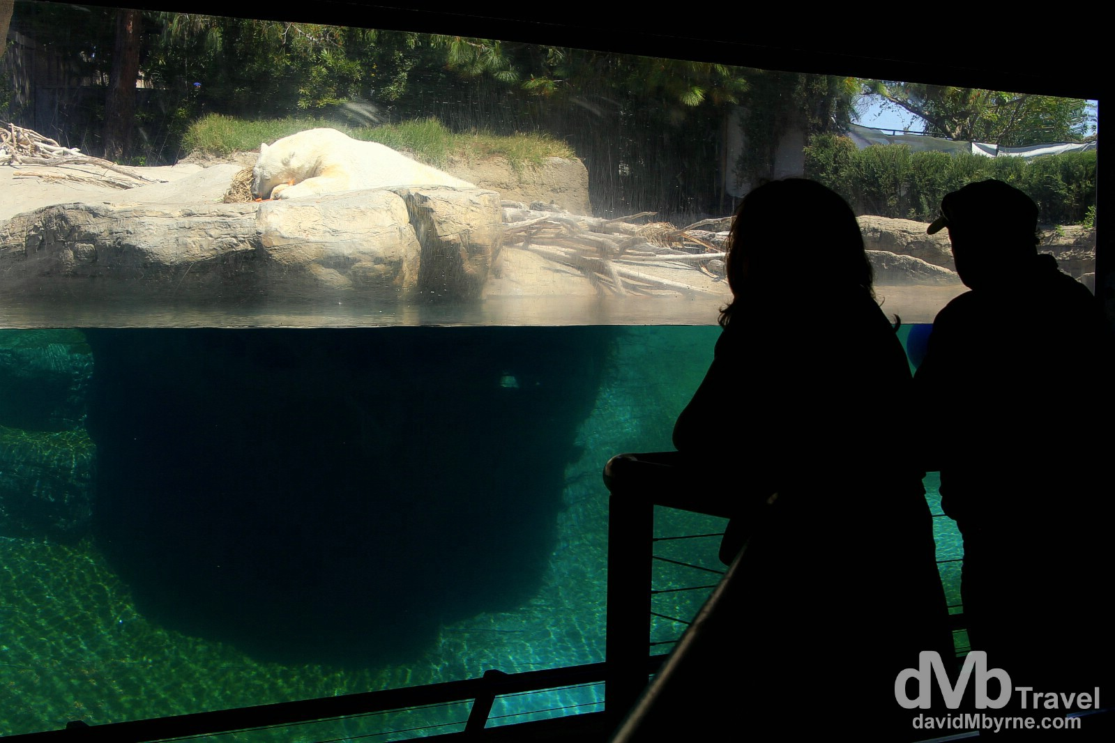 Viewing a polar bear in the Northern Frontier zone of San Diego Zoo. San Diego, California, USA. April 17th 2013.