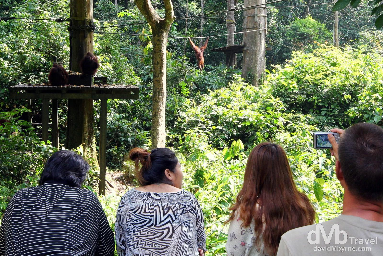 The viewing deck at the Sepilok Orangutan Rehabilitation Centre, Sabah, Malaysian Borneo. June 26th 2012.