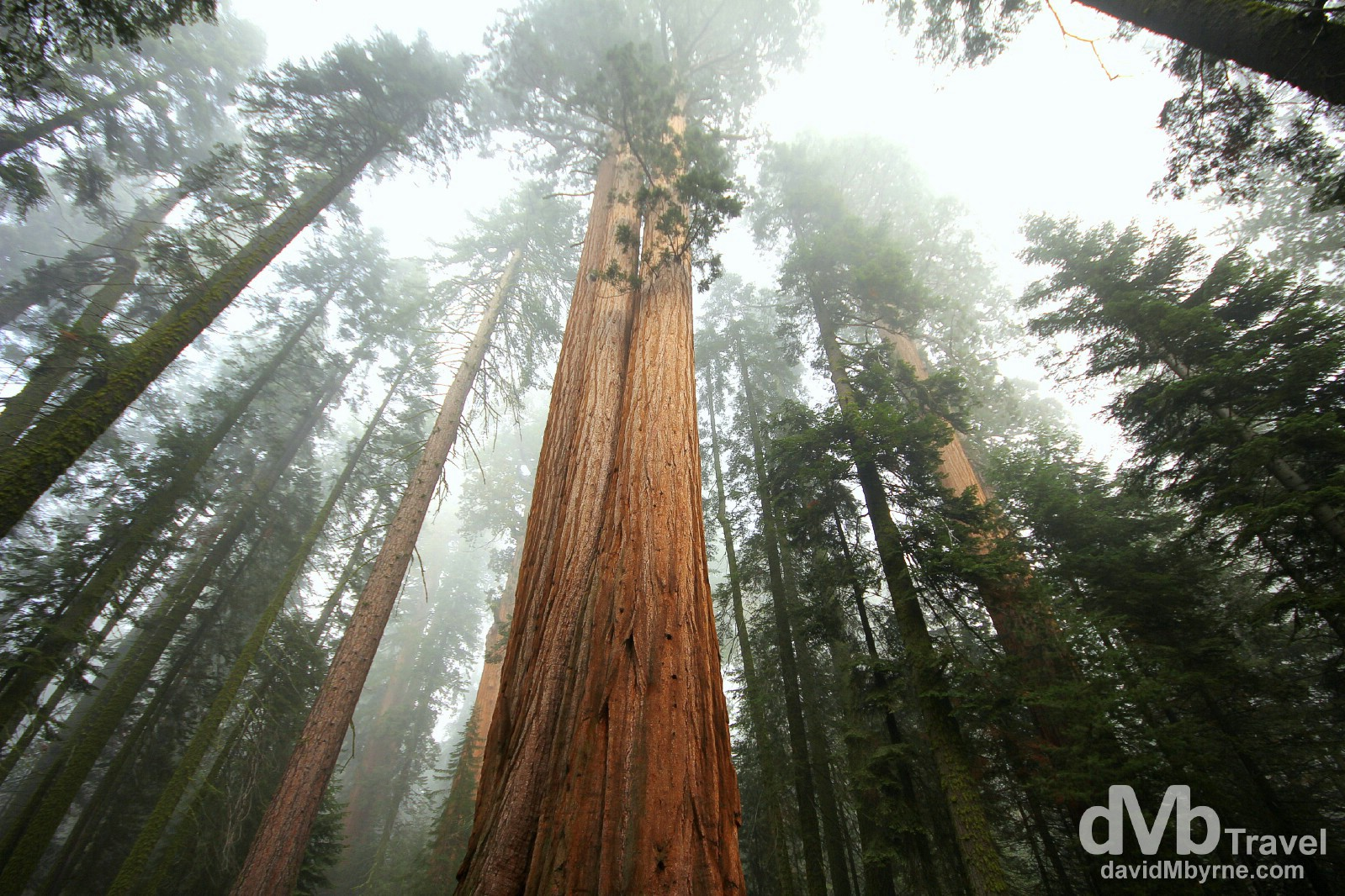 Residents of the Giant Forest of Sequoia National Park, California, USA. April 2nd 2013.
