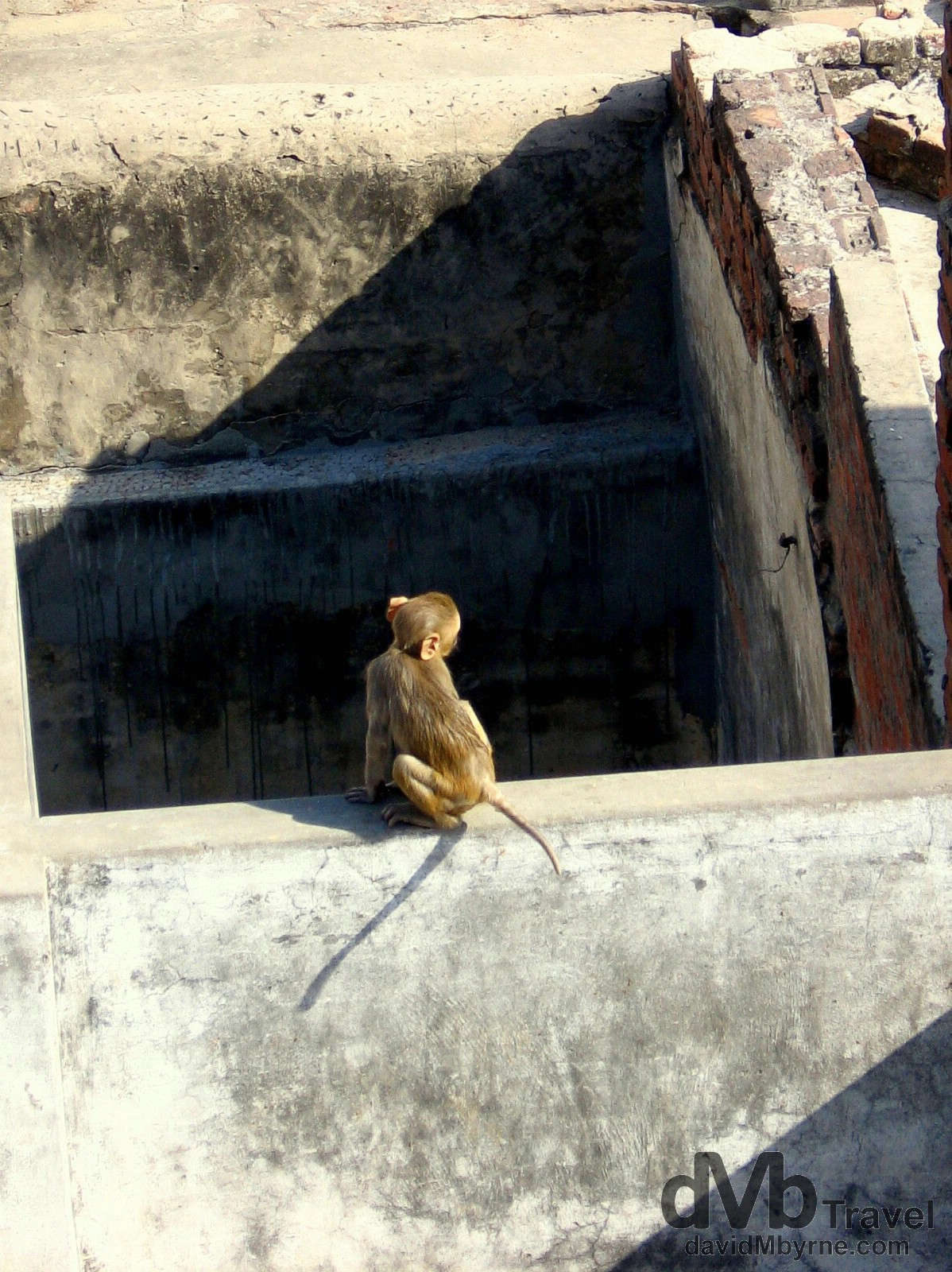 A monkey on the rooftop of a dwelling in Varanasi, India. March 18th 2008.