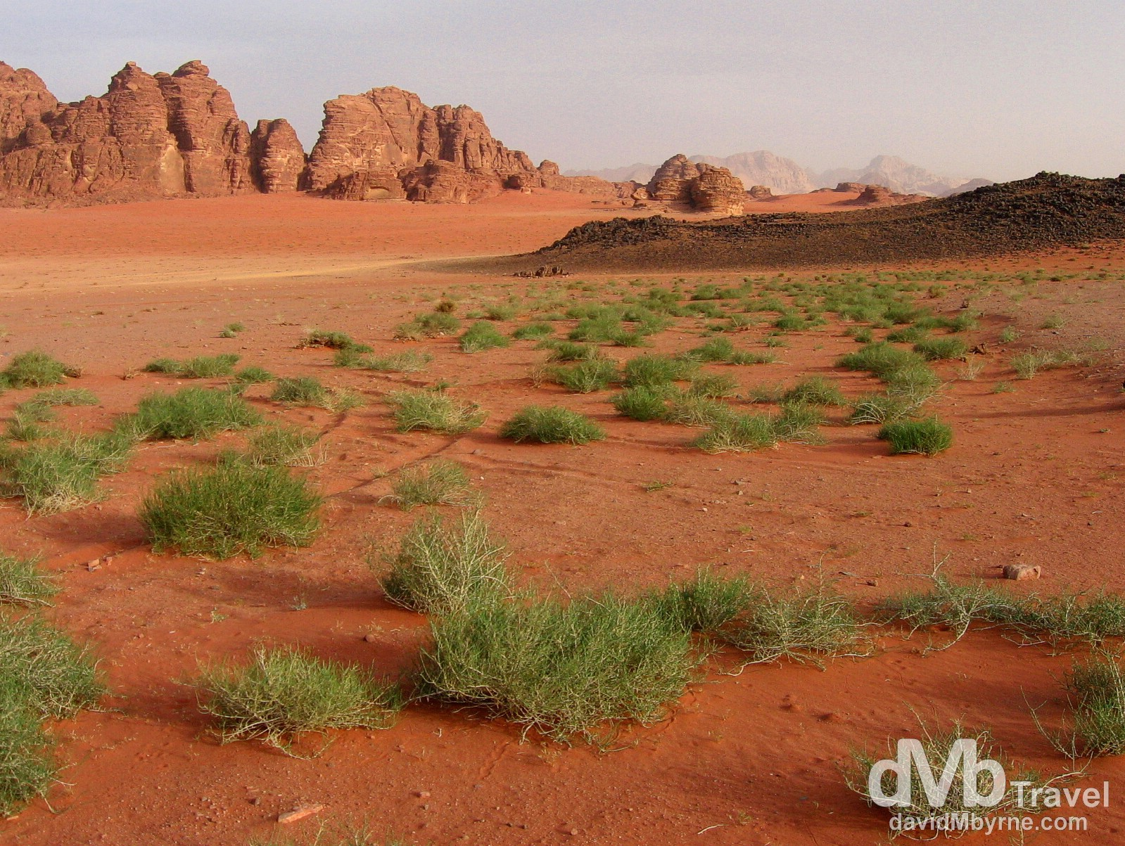 Greenery amongst the red sands of Wadi Rum, Jordan. April 25th 2008.