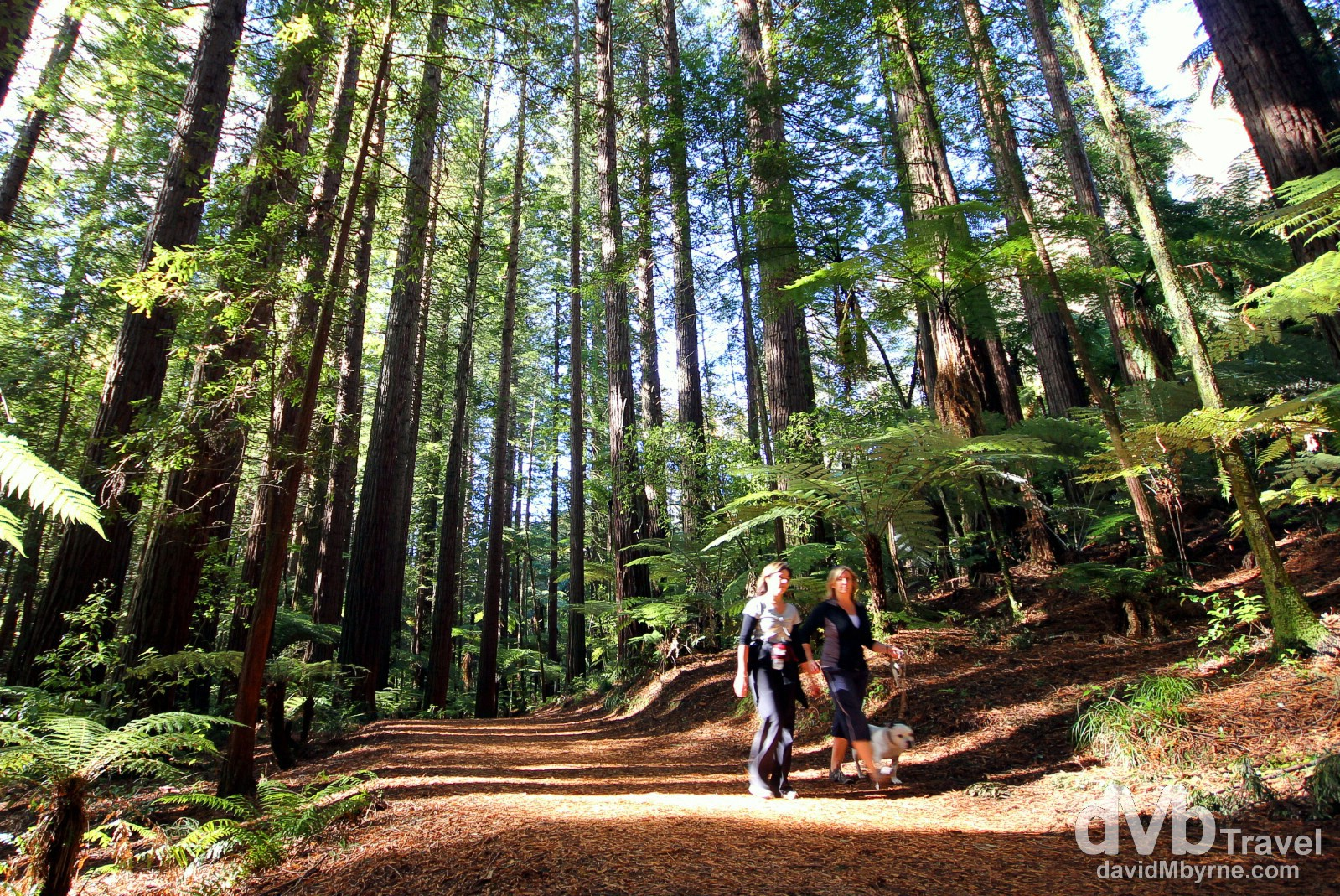Taking a stroll in the Whakarewarewa Forest on the outskirts of Rotorua, North Island, New Zealand. May 6th 2012.