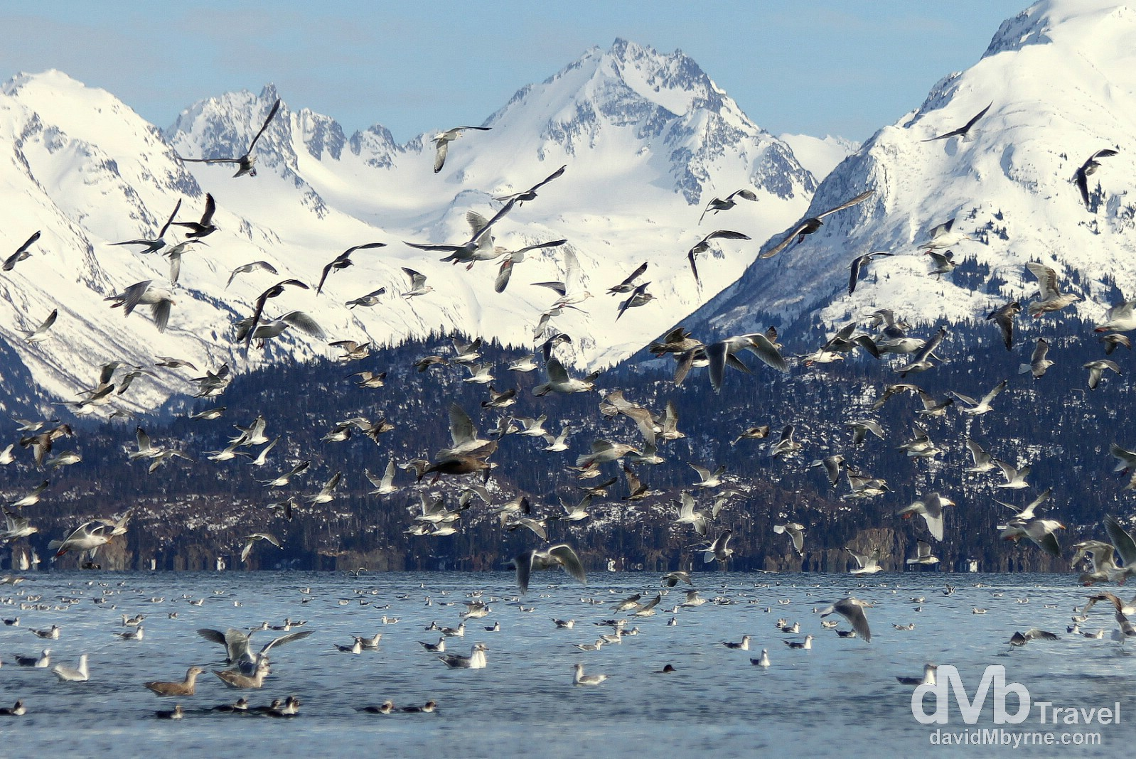 Activity at the end of the Spit in Homer, Kenai Peninsula, Alaska, USA. March 16th 2013.