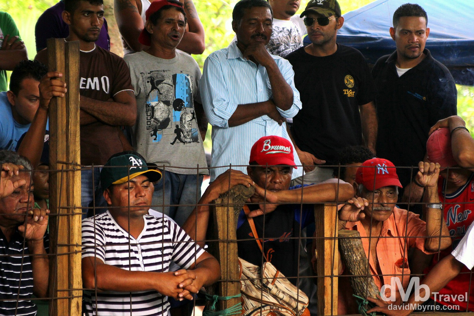 Spectators at a cock fighting bout in Leon, Nicaragua. June 16th 2013.