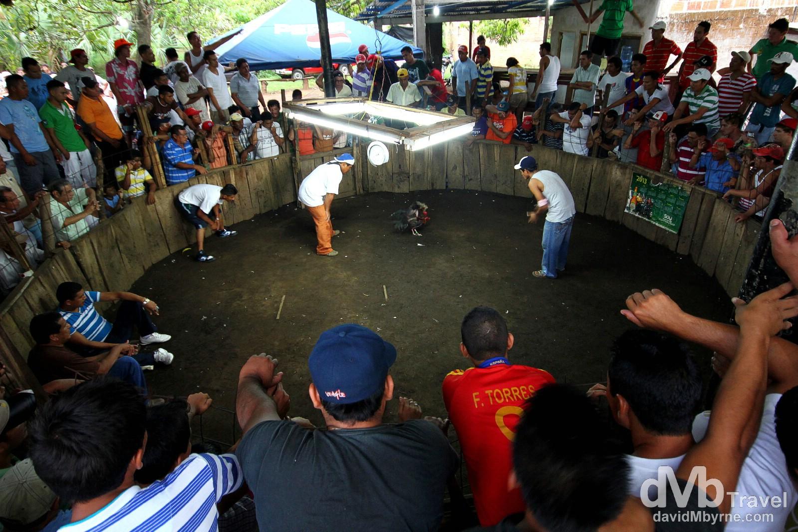 Cockfighting, Nicaragua