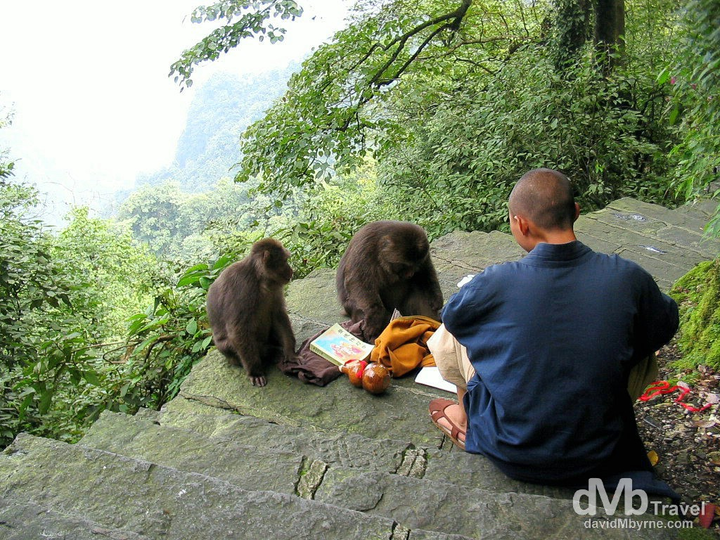 A monk seccumbs to preasure for food from monkeys on the hike up EmeiShan, Sichuan Province, China. September 21st, 2004.