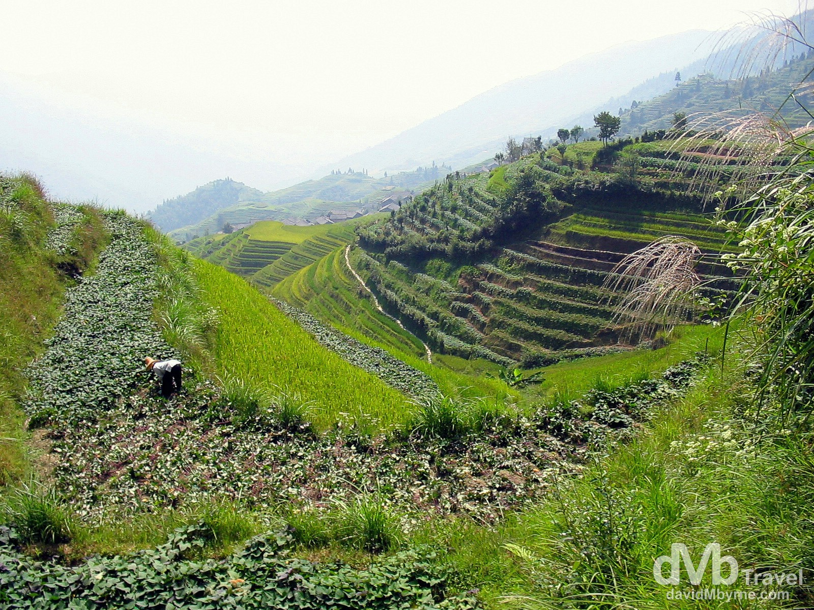 Tending to crops in the hills over Ping An Zhuang minority village, Longji Mountains, Guangxi Province, Southern China. September 15th, 2004.