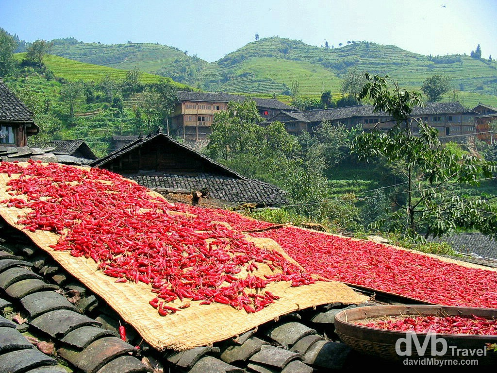 Chillies out to dry in the sun in Ping An Zhuang minority village, Longji Mountains, Guangxi Province, Southern China. September 15th, 2004.