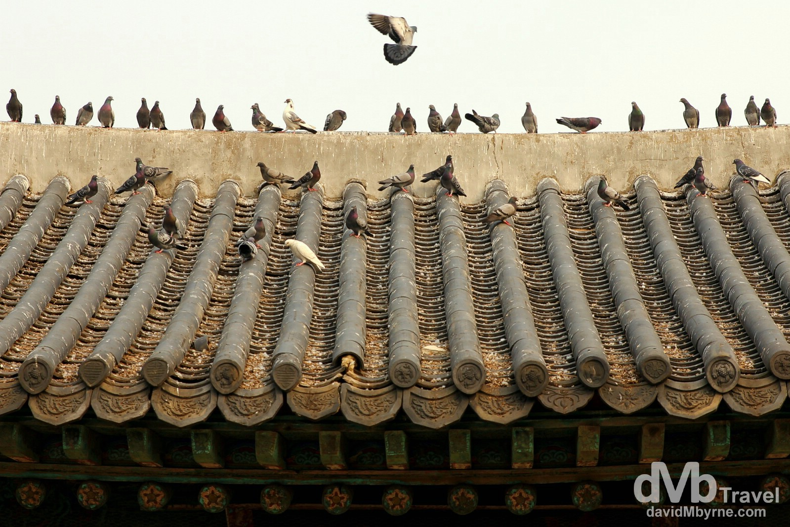 Pigeons on a roof of a section of the Suwon Hwaseong Fortress in Suwon, South Korea. February 23rd, 2014.
