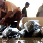 Fish Market, Mutrah, Muscat, Oman. April 26th, 2014.
