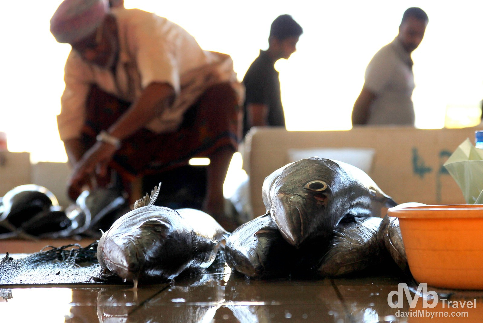Fish Market, Mutrah, Muscat, Oman. April 26th, 2014.