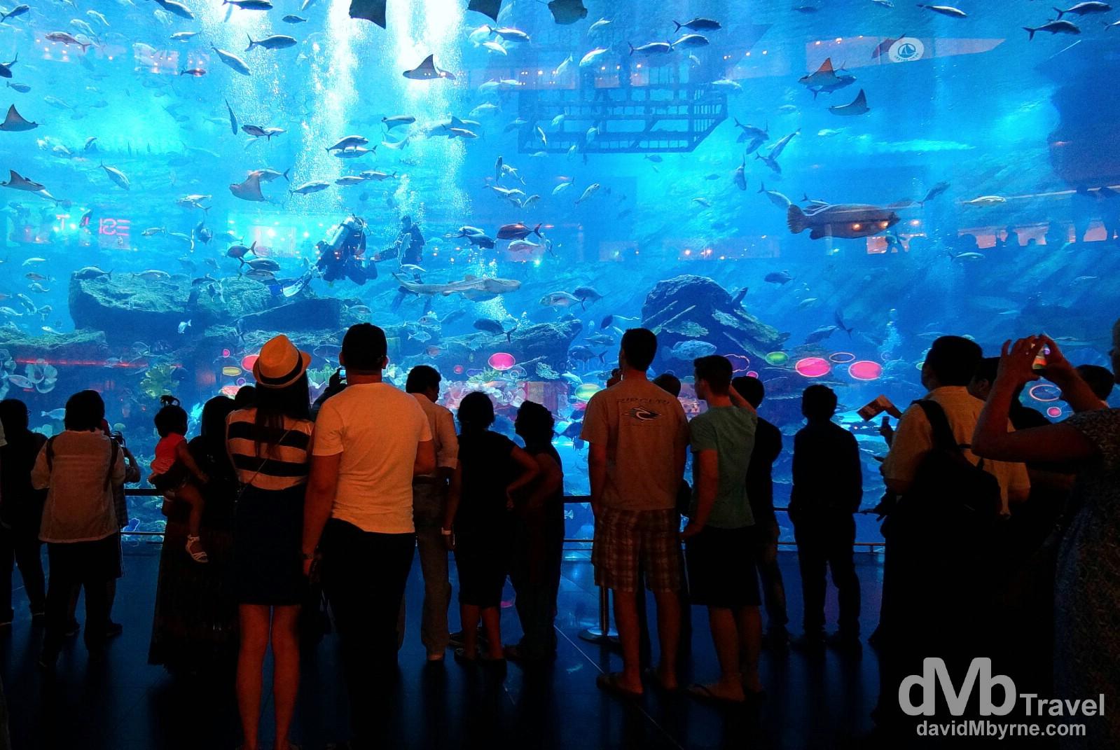 The viewing window of Dubai Aquarium in The Dubai Mall, Dubai, UAE. April 14th, 2014.