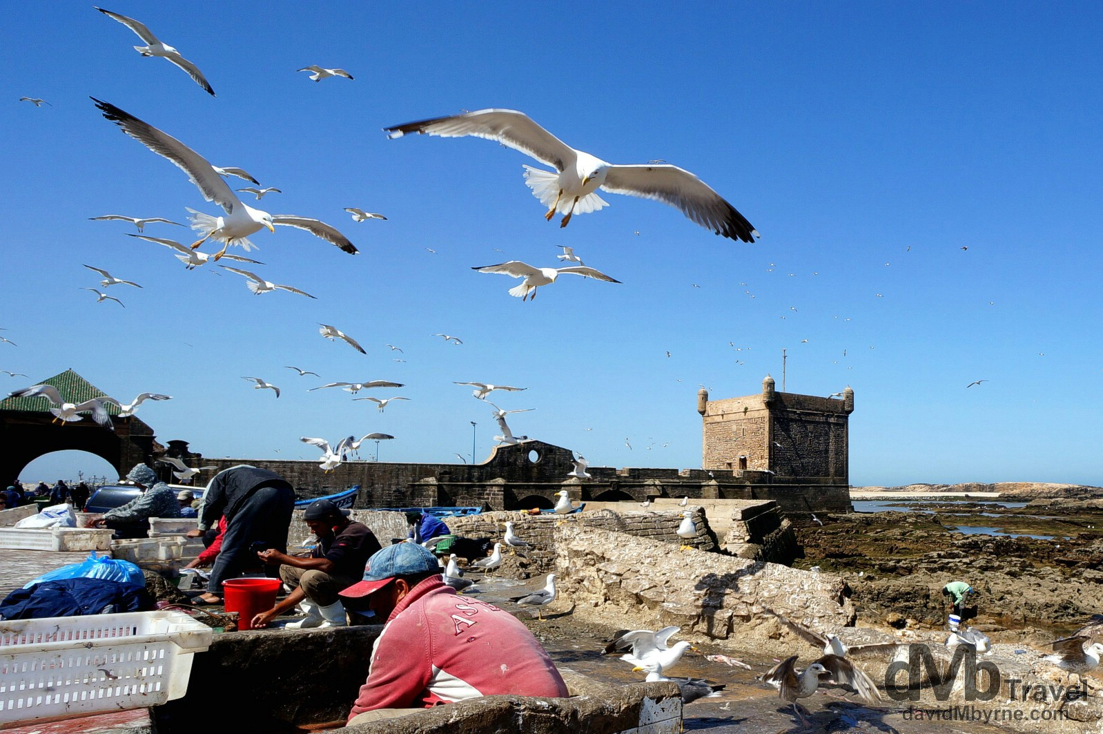 Gulls swooping overhead for remnants of fish being gutted in Essaouira, Morocco. May 3rd, 2014.