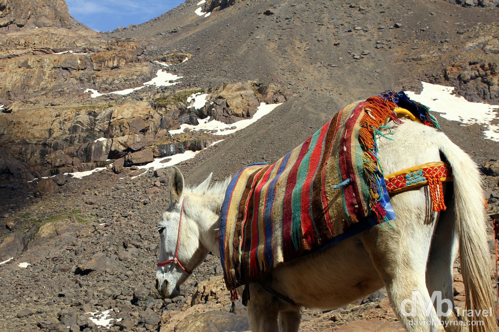 A mule in front of the Toubkal Refuge, High Atlas, central Morocco. May 10th, 2014.