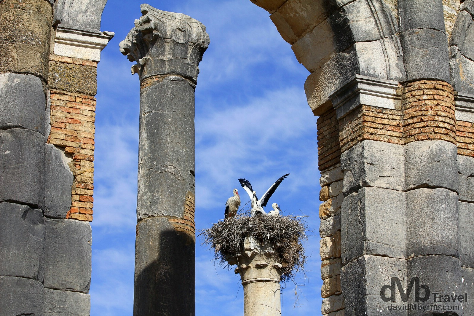 Storks as seen through arches of the Forum at the UNESCO-listed Roman ruins of Volubilis in northern Morocco. May 25th, 2014.