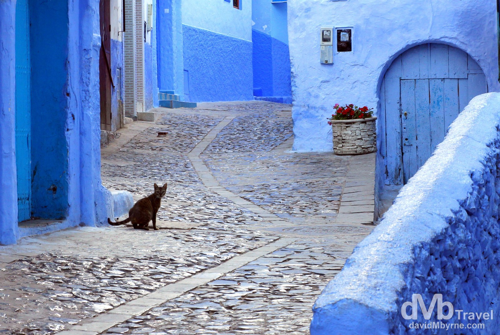 A cat in the early morning lanes of the medina in Chefchaouen, Morocco. June 1st, 2014.