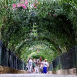 A tour group crowd walking through a rosebush tunnel in a section of the UNESCO-listed Generalife gardens in Granada, Andalusia, Spain. June 11th, 2014.