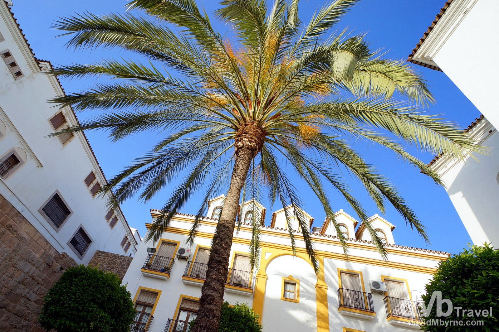 A palm tree in Plaza de los Naranjos, Marbella, Andalusia, Spain. June 6th, 2014.