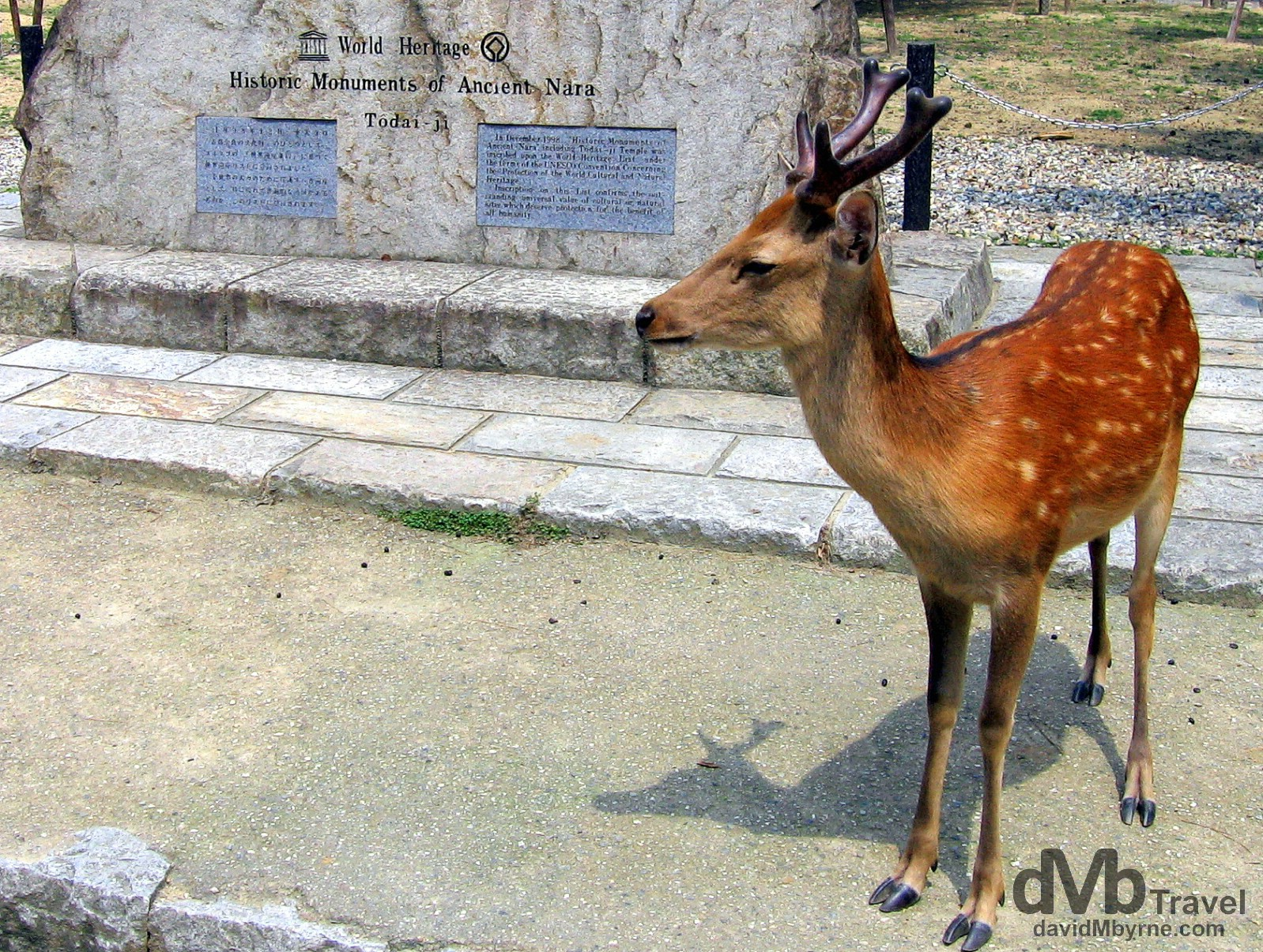 A deer fronting the UNESCO plinth in Nara Koen (Park), Nara, Honshu, Japan. July 19th, 2005.