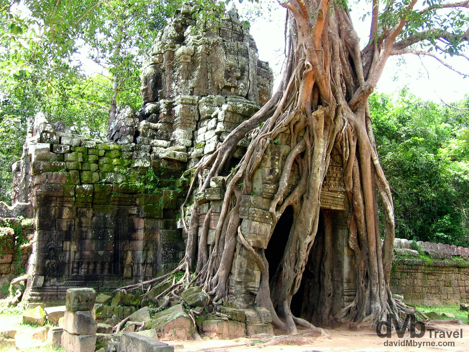 A tree smothers a part of the temple Preah Khan, Angkor, Cambodia. September 20th, 2005.