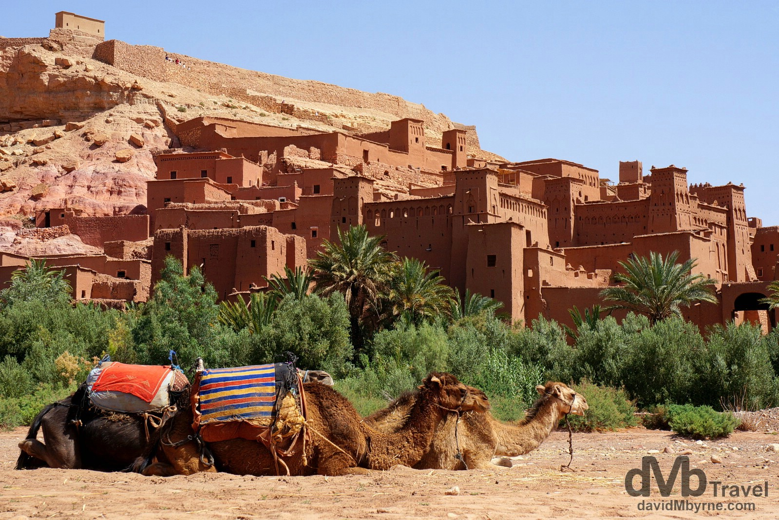 Camels resting in the Parched Oued Ounila riverbed fronting the UNESCO-listed Ait Benhaddou in southern Morocco. May 14th, 2014.
