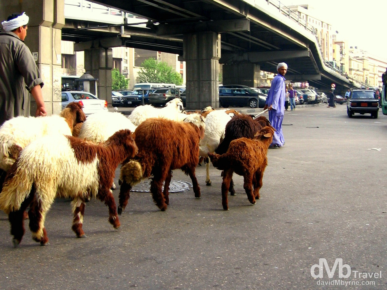 Goat herding on the streets of Al-Azhar, Cairo, Egypt. April 9, 2008.