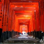 A passageway of Torii gates at the Fushimi Inari Taisha shrine, Kyoto, Japan. November 21st, 2007.