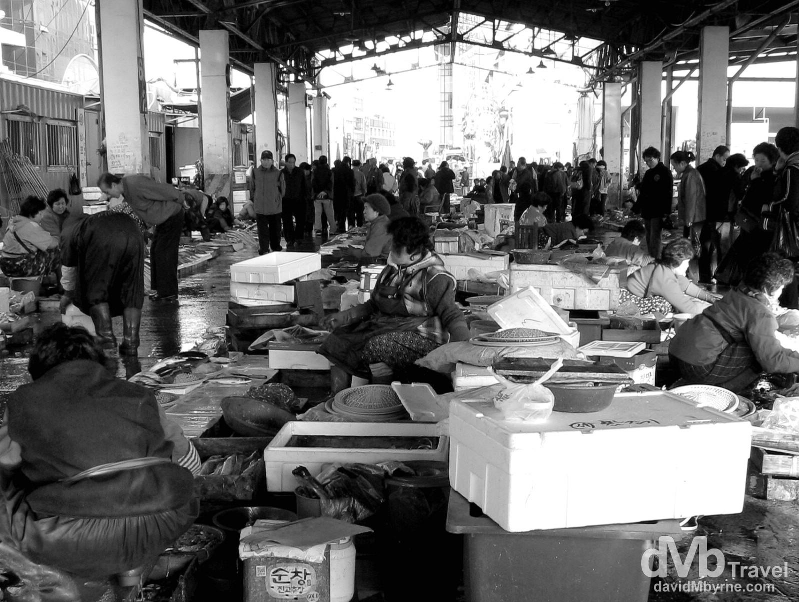 Jagalchi Fish Market, Busan, South Korea. November 23rd, 2007.