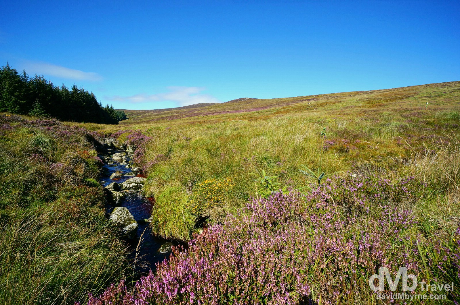 The Sally Gap, Co. Wicklow, Ireland. August 31, 2014.
