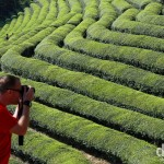 Capturing the scene at Boseong Green Tea Plantation in Jeollanam-do, South Korea. October 11, 2009.