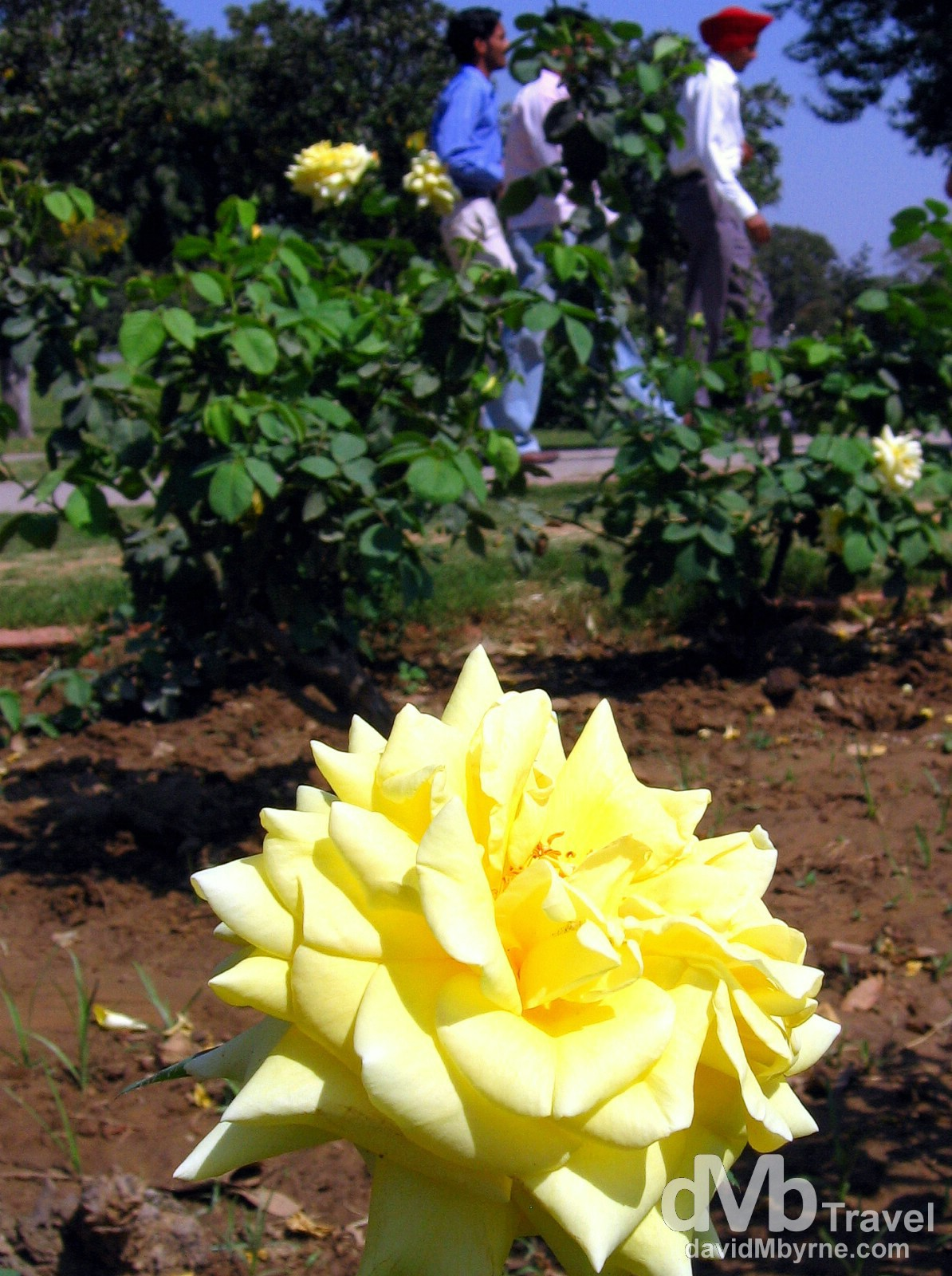 Rose Garden, Chandigarh, Punjab, India. March 23, 2008.