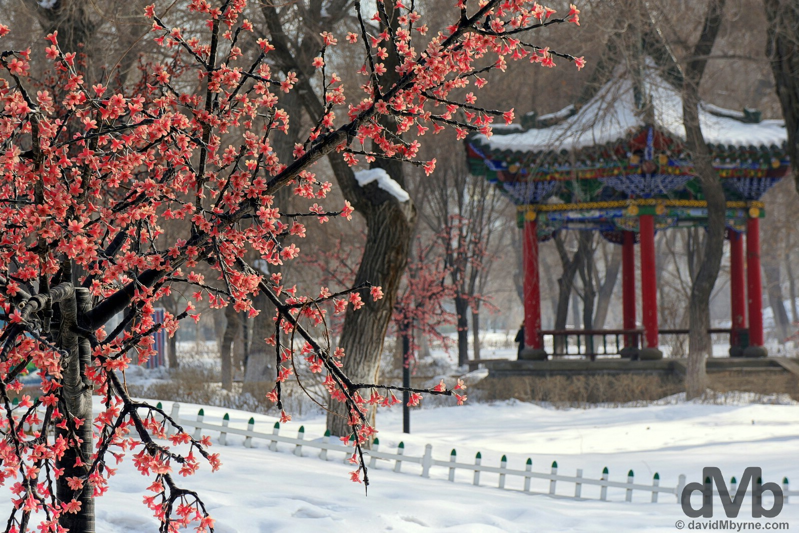 Wintry scenes in Renmin/People's Park in central Urumqi, northwest China. February 10, 2015.