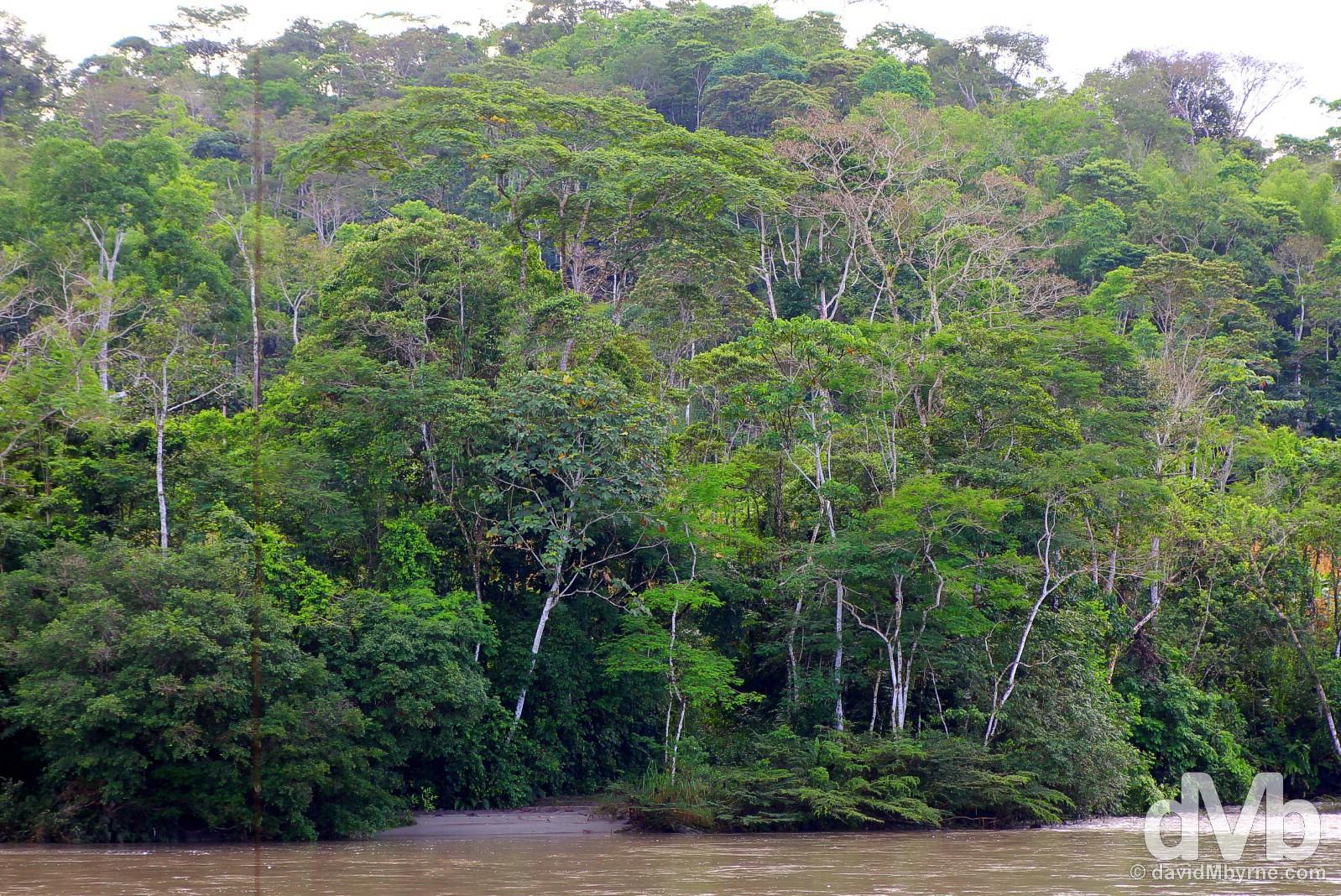 The Ecuadorian rain forest. July 13, 2015.